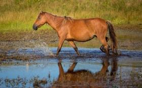 Картинка вода, брызги, конь, лошадь, профиль
