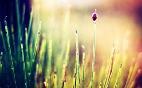 Картинка трава, солнце, макро, лучи, природа, фото, фон