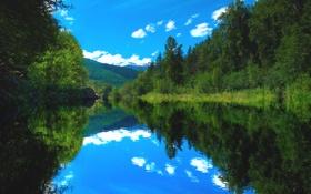 Картинка лес, лето, река, Природа