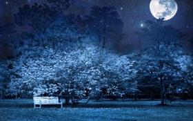 Обои звезды, деревья, скамейка, природа, лавочка, ночь, луна