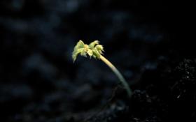 Картинка макро, земля, росток, весна
