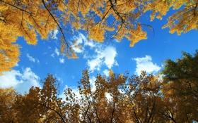 Обои осень, небо, листья, облака, деревья