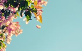 Обои небо, листья, цветы, природа, фото, фон, обои