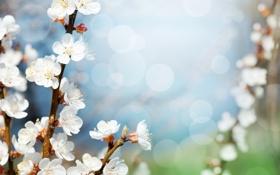 Картинка цветы, ветки, день, яблоня