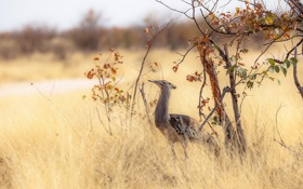 Картинка природа, птица, Африка