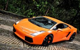 Обои оранжевый, Lamborghini, Gallardo