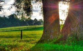 Обои трава, солнце, капли, природа, роса, дерево, утро