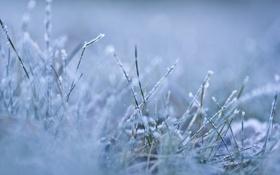 Картинка холод, зима, иней, трава, макро, снег, природа