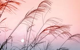 Картинка небо, цвета, макро, закат, природа, луна, растения