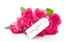 Обои любовь, цветы, розы