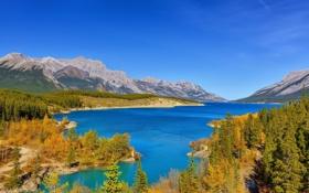 Обои лес, горы, озеро, Канада, Альберта, Alberta, Canada