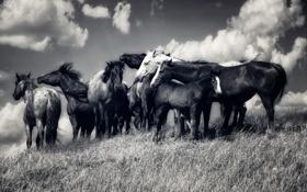 Обои свобода, природа, кони