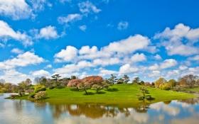 Картинка облака, пруд, трава, деревья, небо, парк, озеро