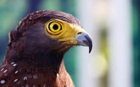 Картинка макро, глаз, птица, орел, голова, клюв