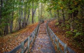 Картинка листья, лес, осень, деревья, путь, парк