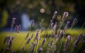 Картинка лето, макро, цветы, природа, фото, фон, обои