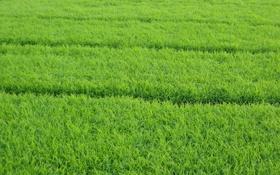Обои сочность, зелень, трава, травка