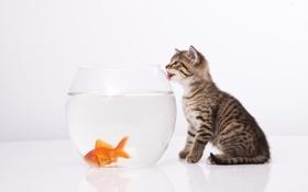 Картинка кот, аквариум, рыбка, забавный, котенок