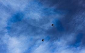 Картинка небо, свобода, полет, птицы