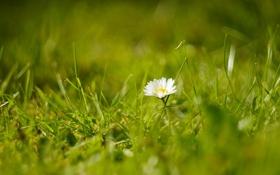 Обои поле, цветок, трава, боке