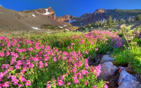Обои природа, горы, цветы