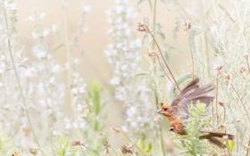 Картинка трава, природа, птица