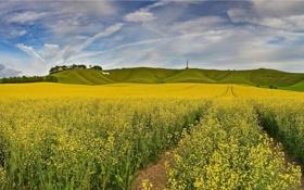 Картинка поле, небо, облака, деревья, цветы, природа, холмы