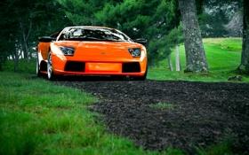 Картинка Lamborghini, Orange, Murcielago, Bull