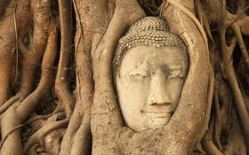 Картинка джунгли, будда, Ban Wat Tum, деревья, голова