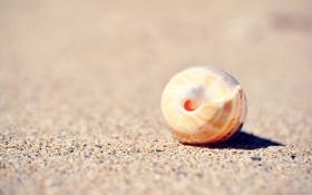 Обои песок, макро, раковина, ракушка, сфера, круглая