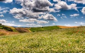 Обои поле, небо, облака, поля, ромашки