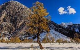 Картинка осень, небо, снег, горы, дерево