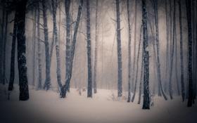 Обои зима, снег, деревья, фото