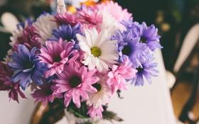 Картинка цветы, букет, лепестки, розовые, белые