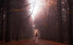 Картинка дорога, лес, девушка, туман