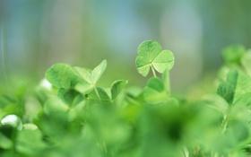 Обои зелень, трава, макро, природа, растения, весна, размытость