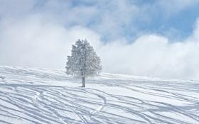 Обои зима, снег, дерево, winter, зимние обои
