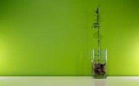 Картинка вода, свет, стакан, зеленый, галька, бамбук