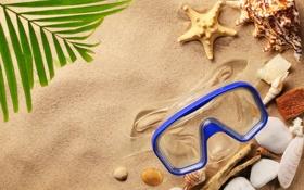 Картинка песок, пляж, лето, ракушки, seashells