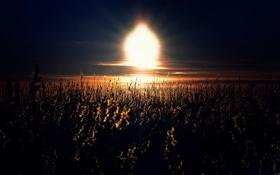Картинка поле, небо, трава, солнце, свет, закат