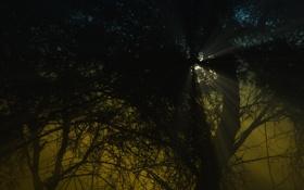 Обои лучи, свет, ветки, природа, растения, кусты