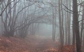 Картинка дорога, осень, лес, деревья, туман, листва