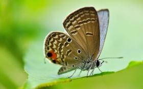 Картинка лист, бабочка, крылья