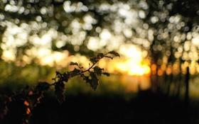 Обои солнце, природа, блики, ветка