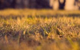 Обои трава, макро, природа, фотографии, обои на рабочий стол