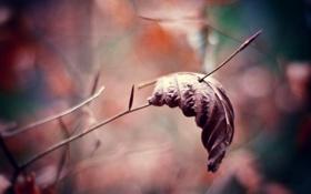 Картинка осень, макро, природа, фото, фон, обои, ветка