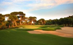 Картинка поле, небо, трава, деревья, спорт, гольф
