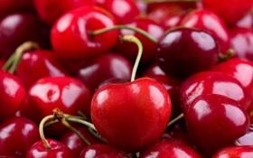 Обои cherry, черешня, вишня, fresh, sweet, berries, ягоды