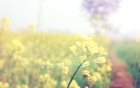 Картинка макро, цветы, Природа, растения, цветочки, wallpapers, обои природа