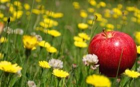 Обои макро, трава, яблоко